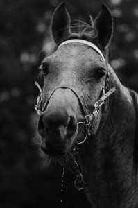 Equitation 03