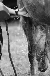 Equitation 09