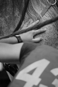 Equitation 11